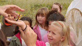 education-butterfly-tagging