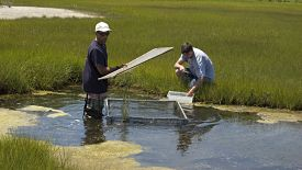 research-saltmarsh-update-2012