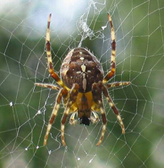 creature-feature-spider