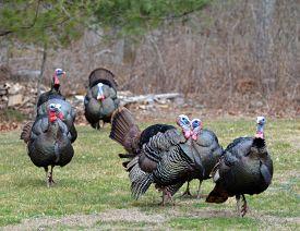 turkey-trot-2