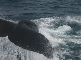 whale-watch-1